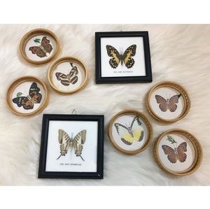 VTG Butterfly Wall Art/Coasters 🦋